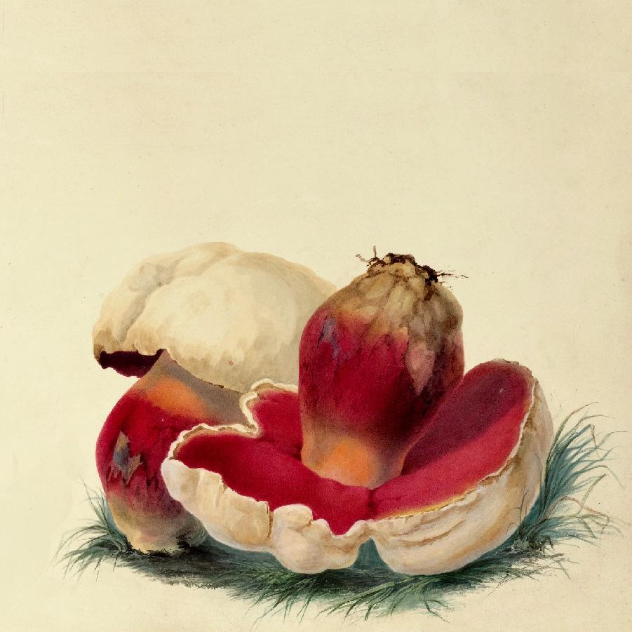 Obrazek przedstawiający dwa grzyby na zielonej ściółce.